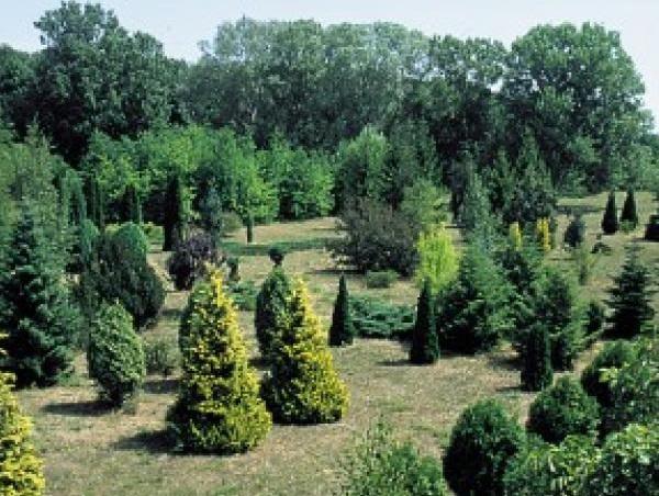 Püspökladány Arboretum